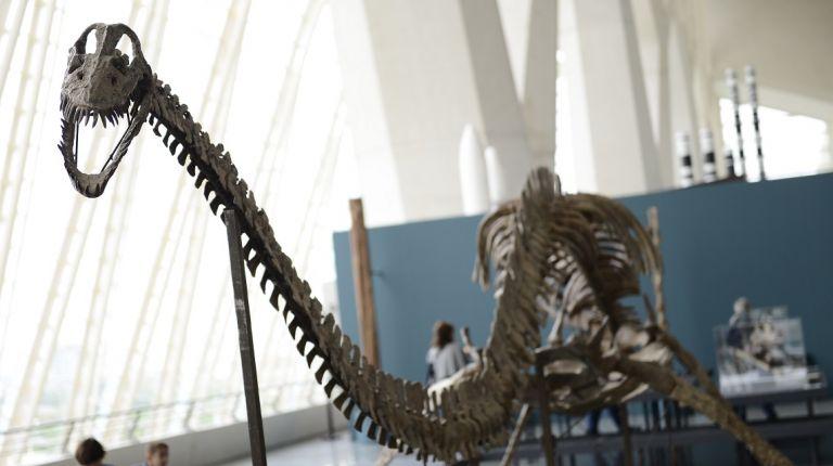 """El 6 de enero la exposición """"Els nostres dinosaures"""" finalizará su periodo de visita"""