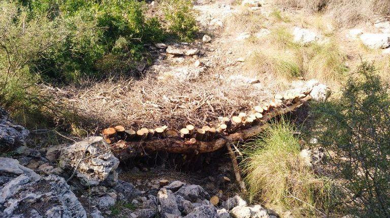 Santa Pola reforestará su Sierra y limpiará las zonas en mal estado