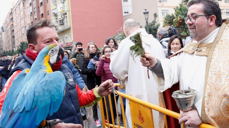 El patrón de los ganaderos y protector de los animales, San Antonio Abad, se celebra por toda la provincia de Valencia
