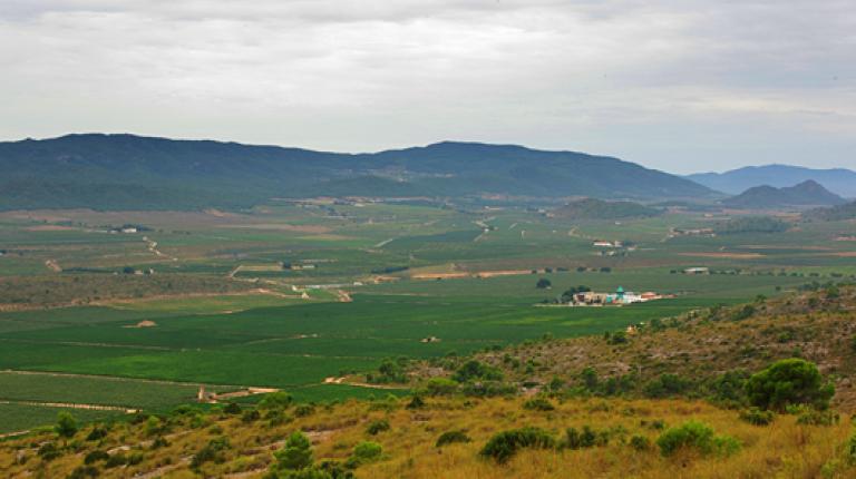 Recorrido entre viñas y olivares por Villena