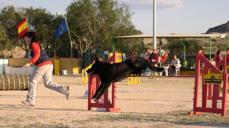 VIII Trofeo de Agilidad Canina Villa en Santa Pola