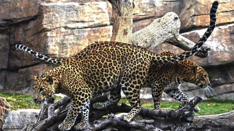 El Bioparc de Valéncia cumple 10 años con 5 millones de visitantes