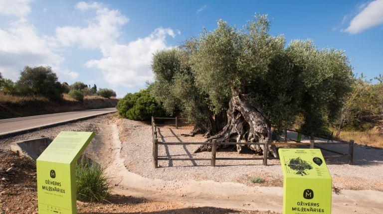 198 árboles monumentales quieren que los visitemos