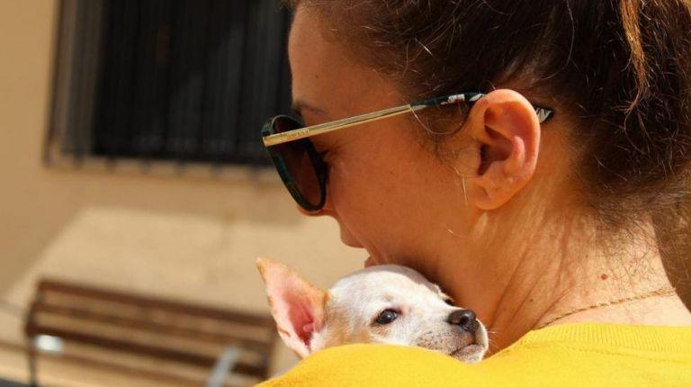 Festival Canino y de la Adopción en l'Alfàs del Pi